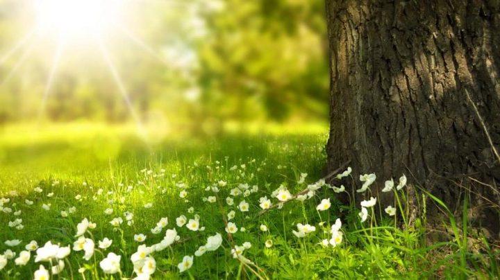 La naturaleza y los beneficios que ofrece