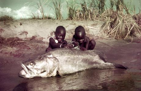 ¿El fin de la pesadilla de Darwin en el lago Victoria?